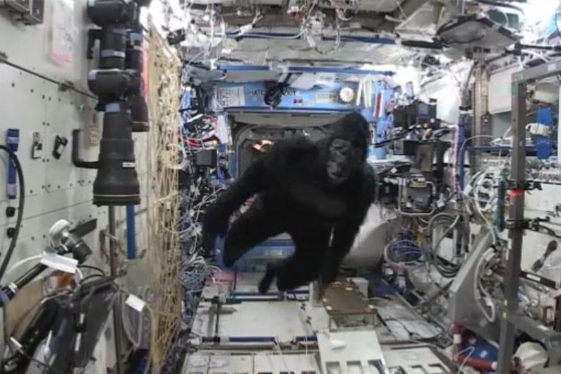 Le gorille dans l'espace et l'astronaute qui s'ennuie