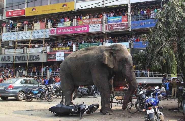 Un éléphant saccage une ville dans l'est du pays