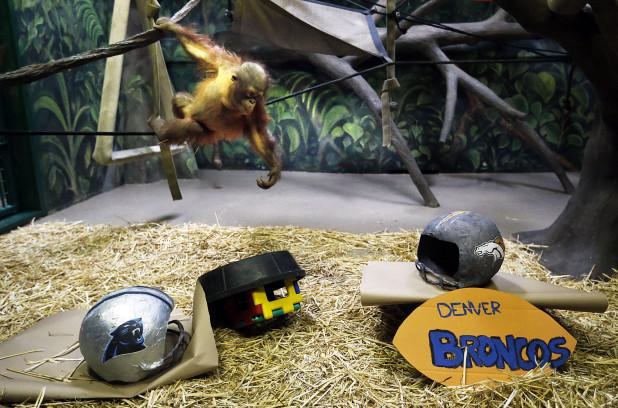 Tuah, le singe - Photo AP