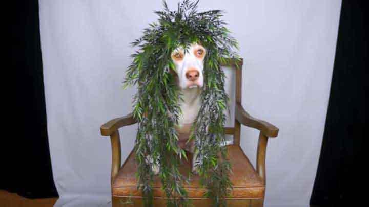 chien-fleuri