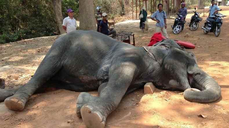 elephants-combodge