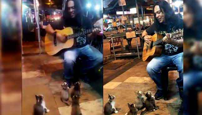 chats-guitare
