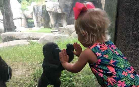 fille-et-gorille-Une
