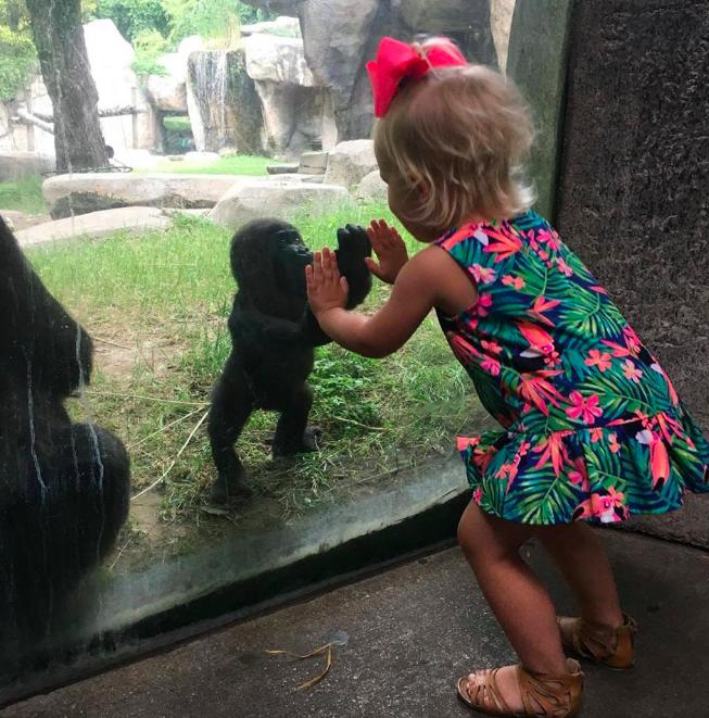 fille et gorille