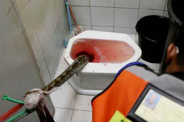 python-accident
