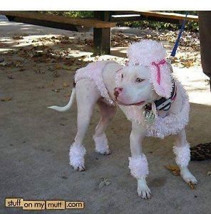 camouflage pittbull