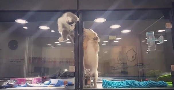 chat chien evasion