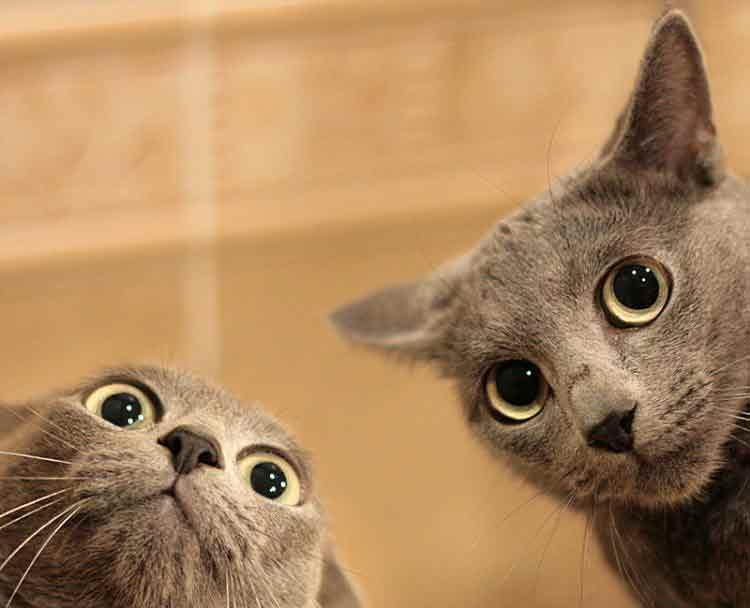 chat-etonne