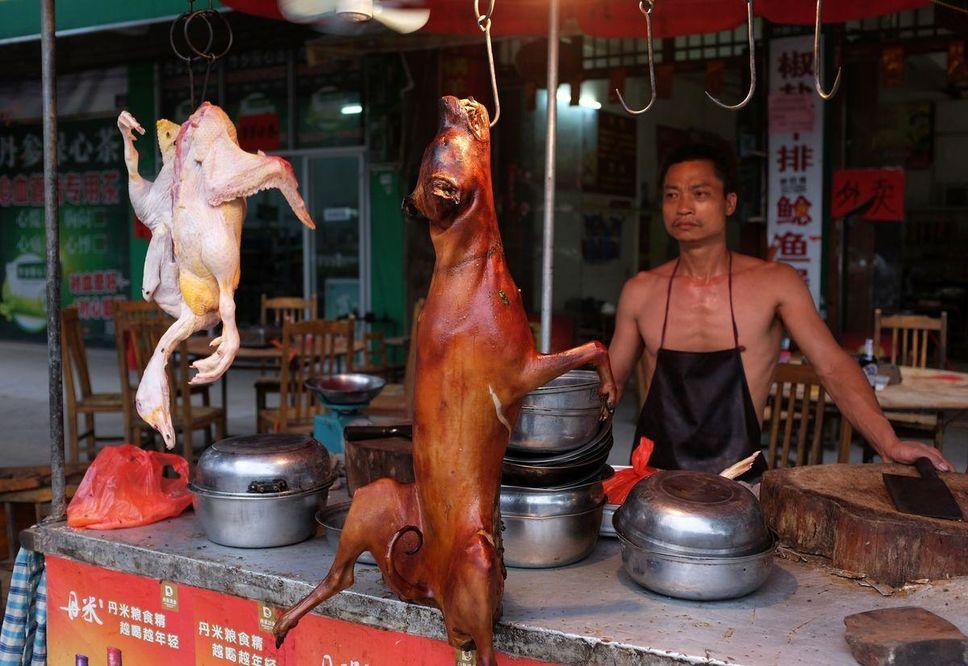 chiens viande