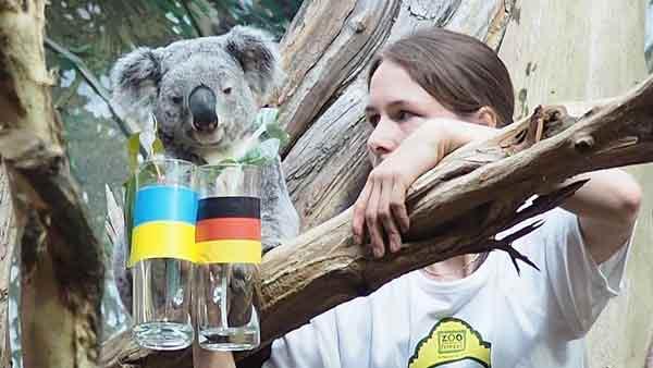 koala-euro