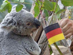 koala-euro1