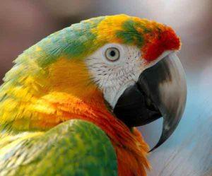 perroquet-1
