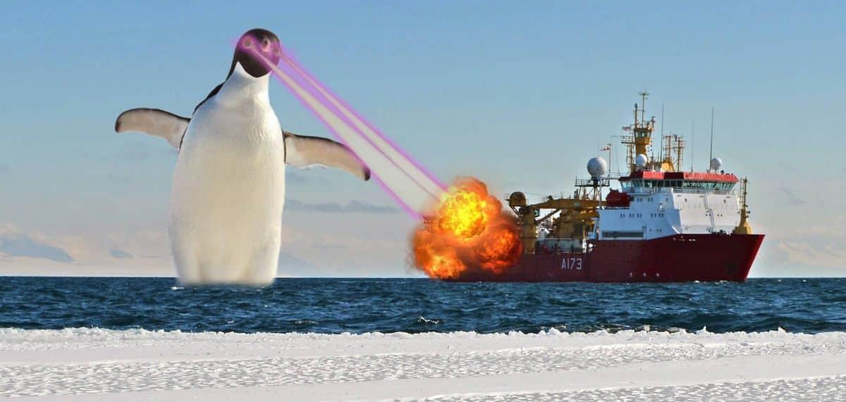 pingouin 5