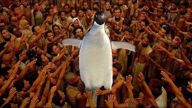 pingouin 7