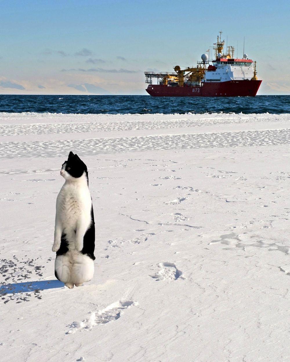 pingouin 8