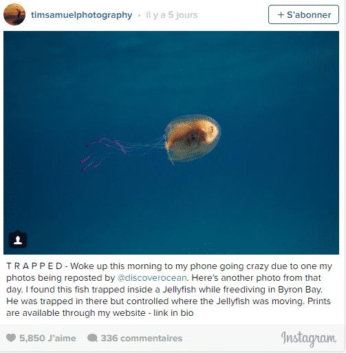 poisson meduse 1