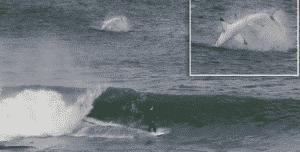 surfeur requin