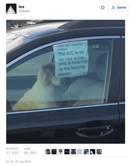 tweet chien