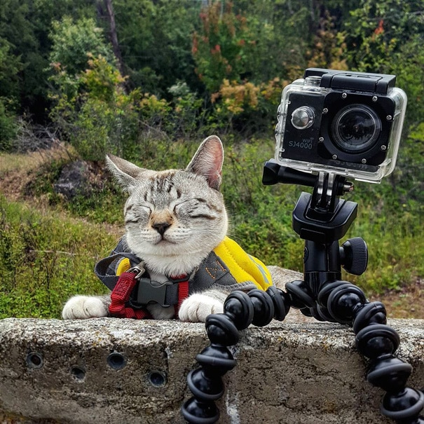 camping avec son chat 14