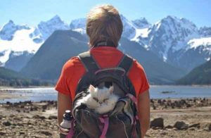 camping-avec-son-chat-15