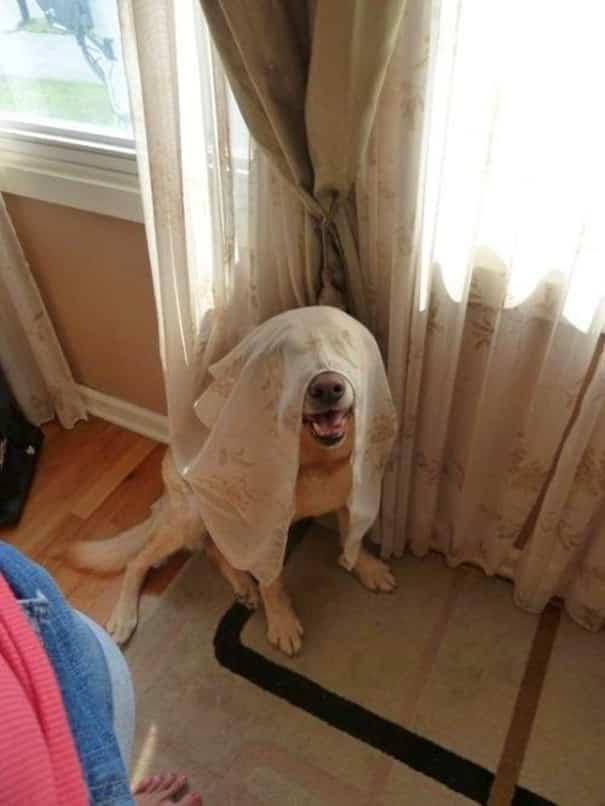 chiens cache 11