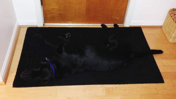 chiens cache 18