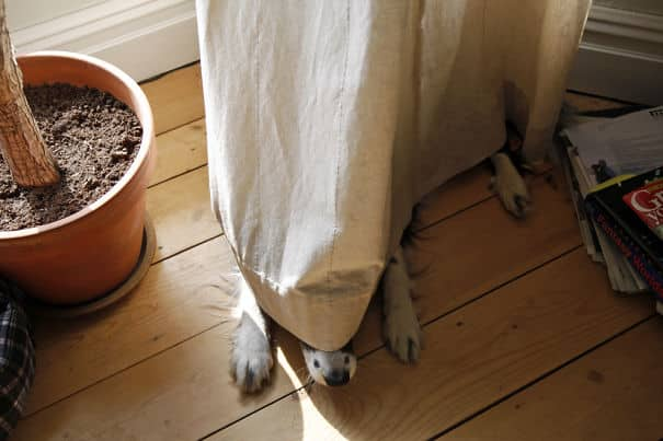 chiens cache 20
