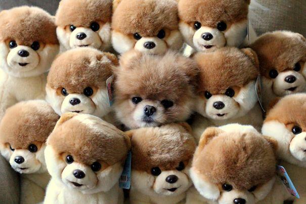 chiens cache 4