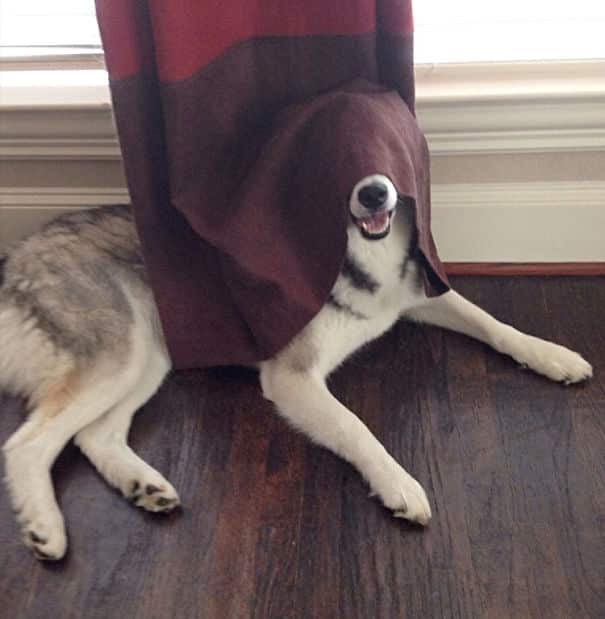 chiens cache 6