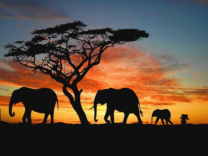 elephant peluche 1