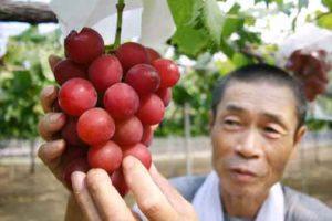 grappe-raisins-japon