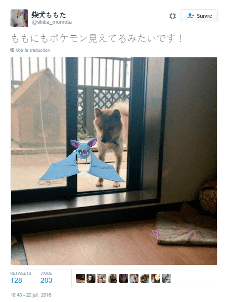 pokemon animaux 1