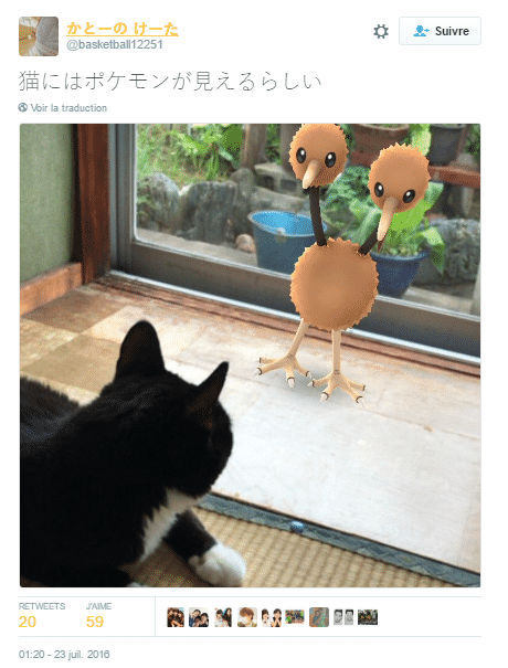 pokemon animaux 3