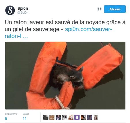 raton sauve