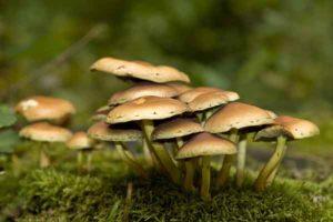 champignons-1