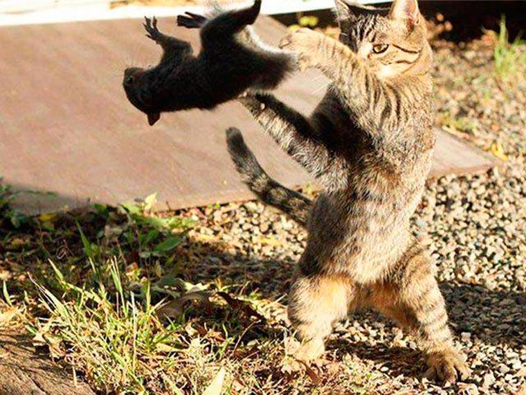 chat ecureuil