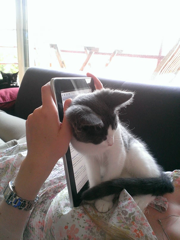 chats intimite 13