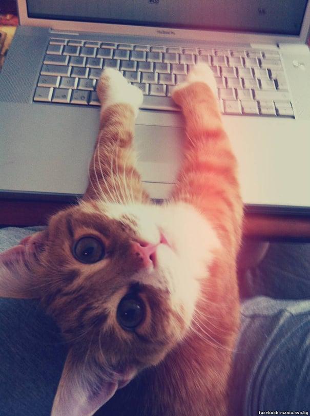 chats intimite 5