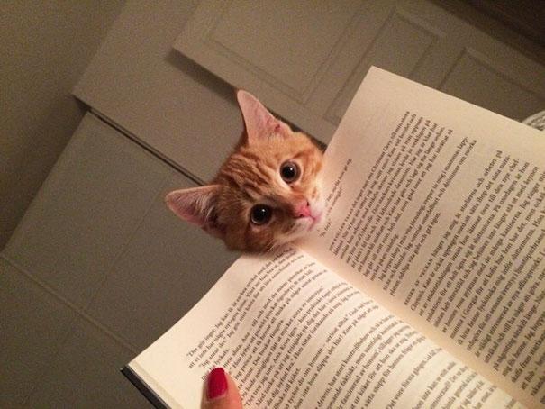 chats intimite 8
