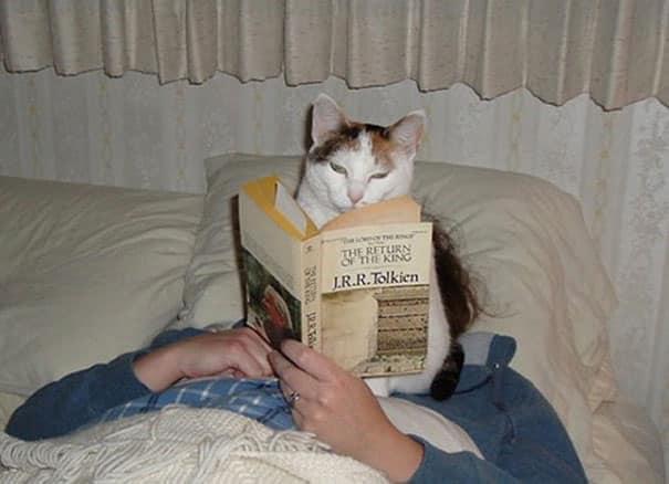 chats intimite 9