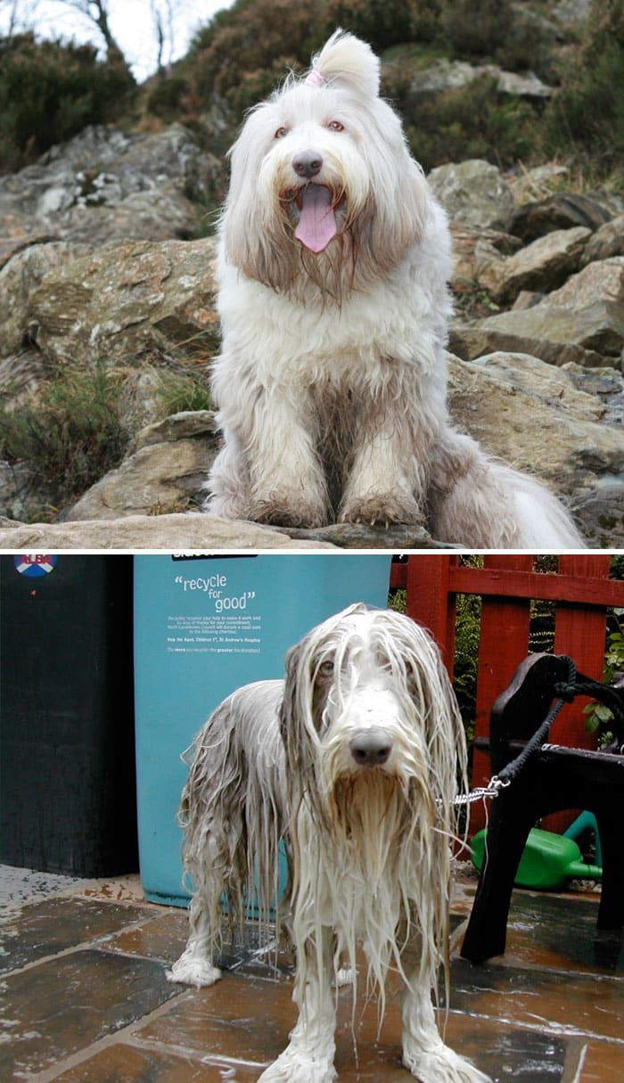 chien et bain 12