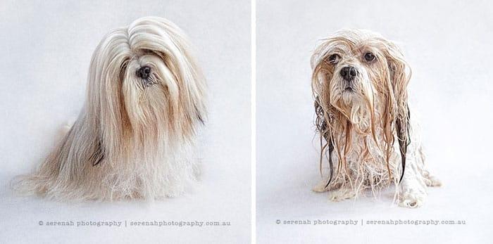 chien et bain 13