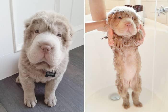 chien et bain 14