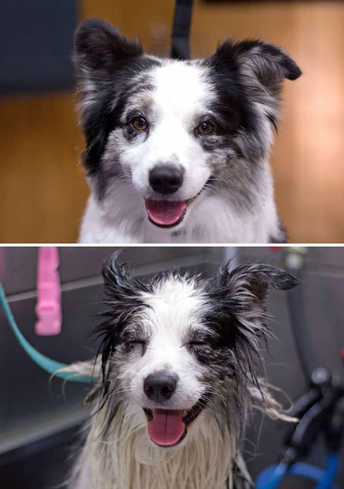 chien et bain 15