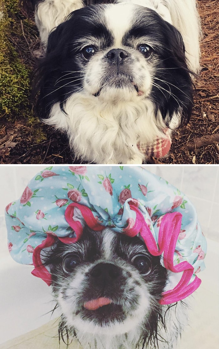 chien et bain 16