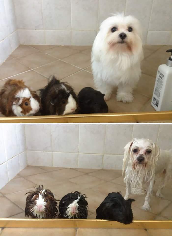 chien et bain 4