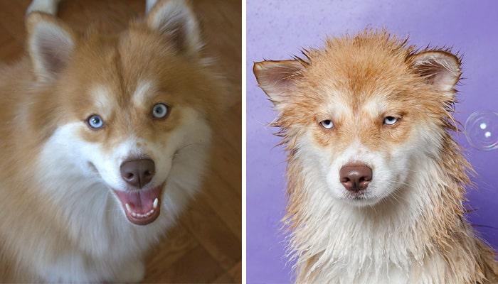 chien et bain 6