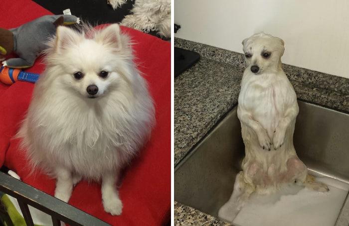 chien et bain 7