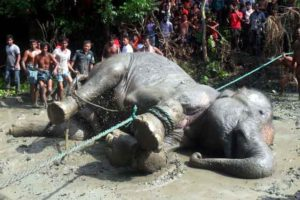 elephant-sauvetage