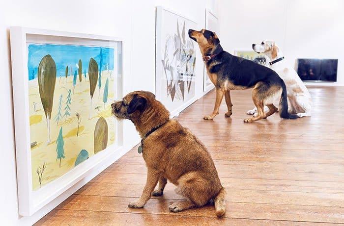 expo pour chiens 0